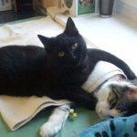 Kucing Perawat, Rademenes Sang Kucing Perawat yang Memeluk Setiap Pasien