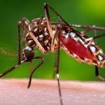Mengenal Lebih Dekat Virus Zika